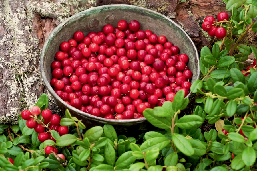 A bowl of lingonberries surrounded by green leaves.