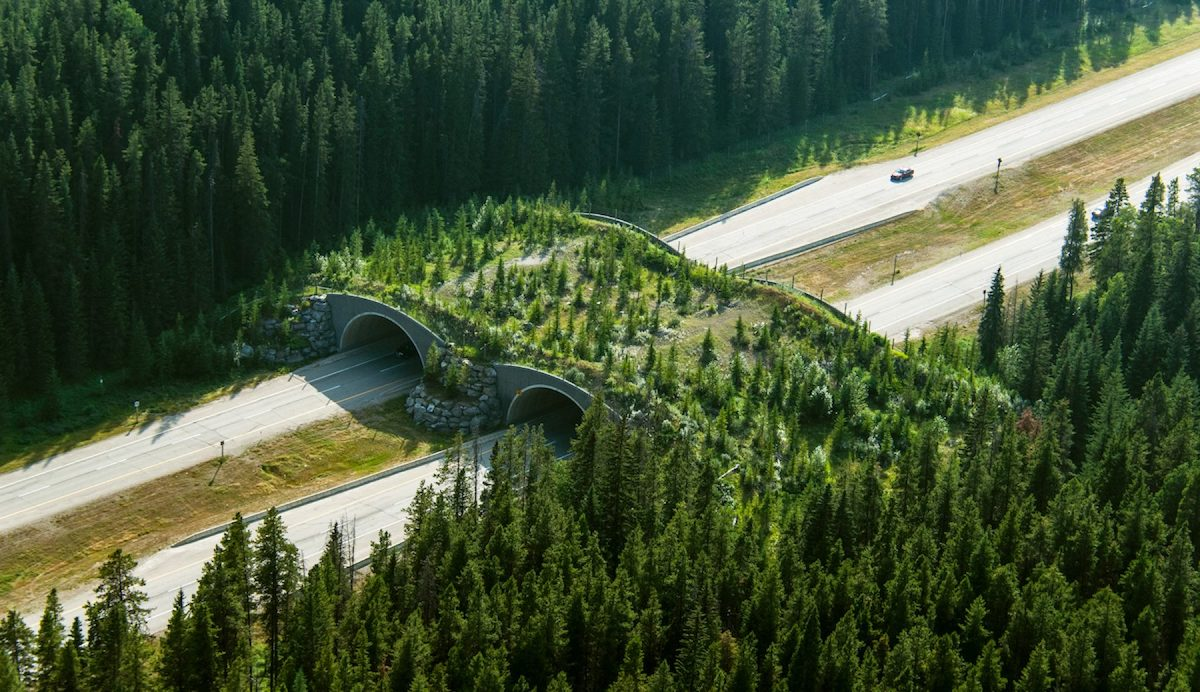 Animal overpass above highway with greenery