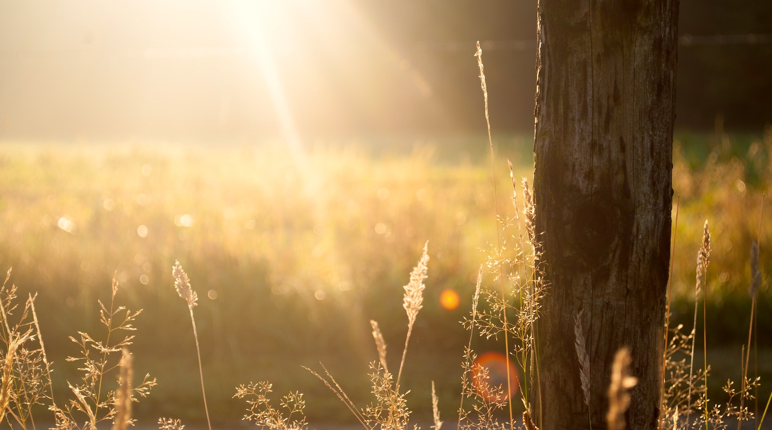 Forest with sun in background