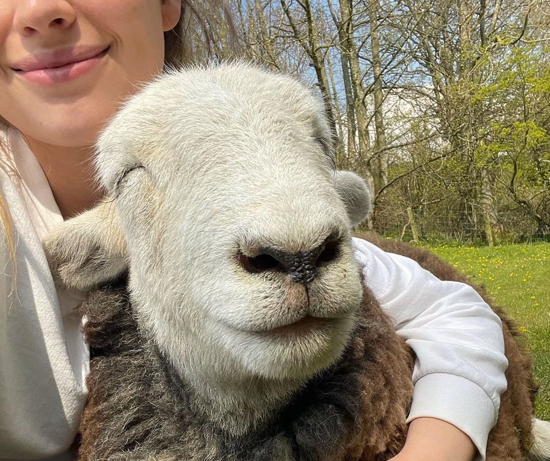 Sheep smiling while cuddling with woman