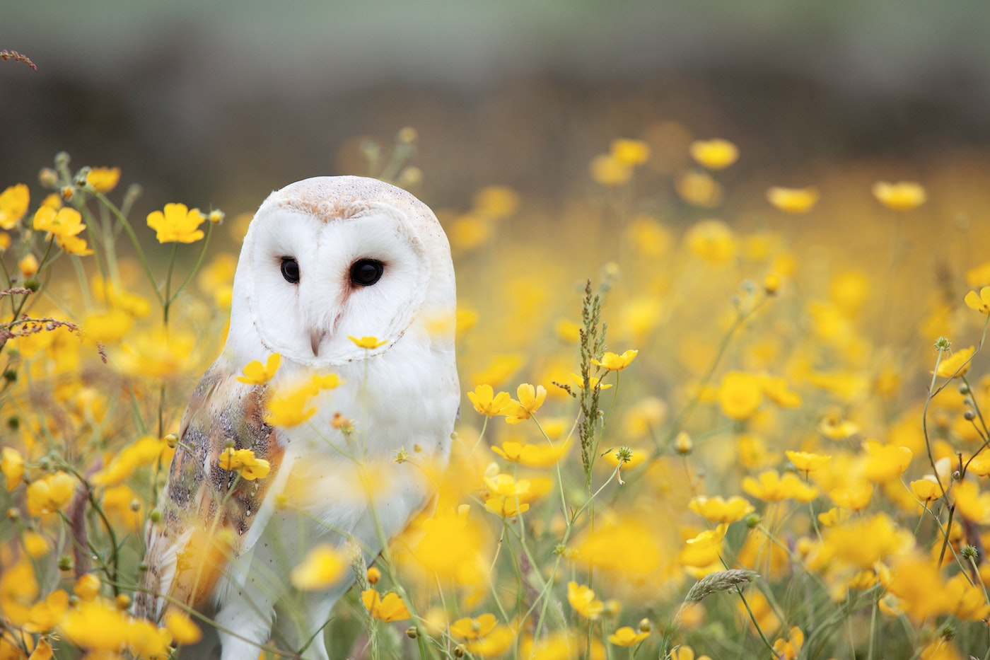 white and brown owl sitting in field